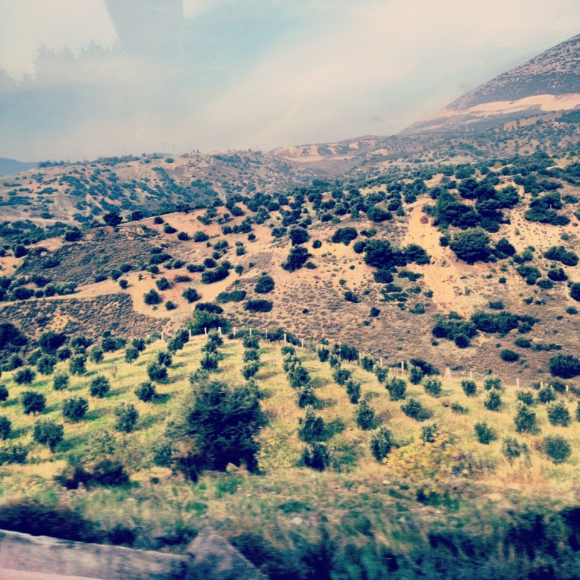 citrus fields in Hatay Province, just south of Osmaniye