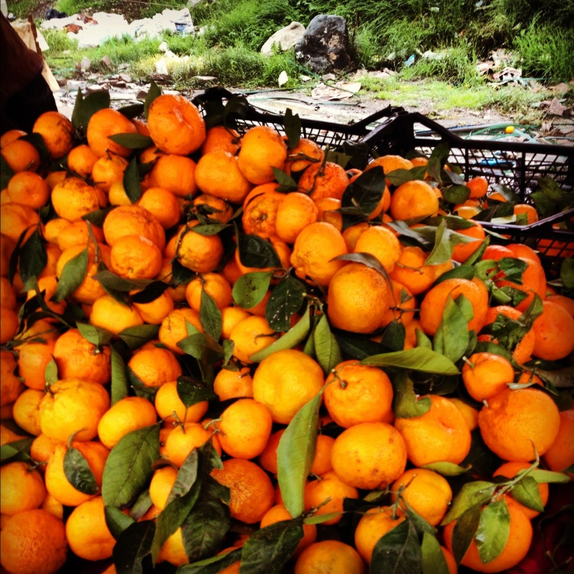 Citrus at local pazer (farmer's market)