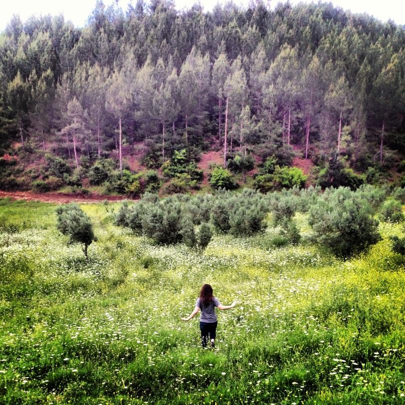 Glorious fields around Osmaniye