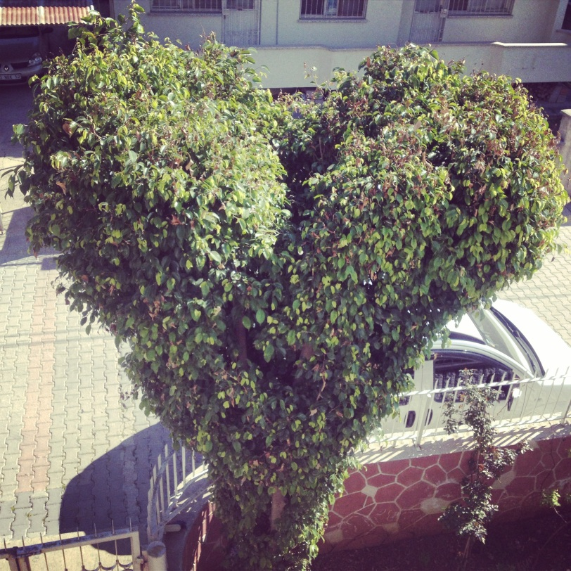 Their special heart-shaped bush